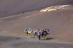 Езда туристов на верблюдах быть Стоковые Фото
