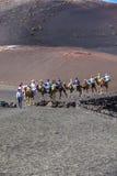 Езда туристов на верблюдах быть Стоковое фото RF