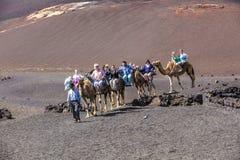 Езда туристов на верблюдах быть Стоковая Фотография RF
