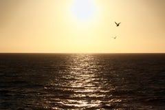 Езда шлюпки захода солнца от острова Каталины к материку Стоковые Изображения