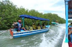 Езда шлюпки мангровы Стоковое Изображение RF