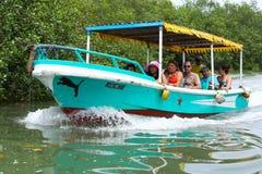 Езда шлюпки мангровы Стоковая Фотография RF