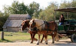 Езда экипажа лошади, Camargue, Франция Стоковые Изображения