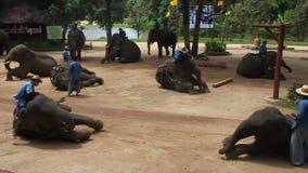 Езда Ahouts на слонах во время выставки сток-видео