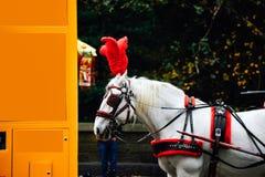 Езды лошади и экипажа в Central Park Нью-Йорке стоковое изображение