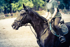 Езды спортсмена девушки на лошади Стоковая Фотография