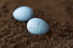 2 декоративное, синь пасхи запятнали яичка с внутри structur  Стоковое Фото