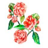 декоративные цветки Цветок вектора реалистический Стоковая Фотография