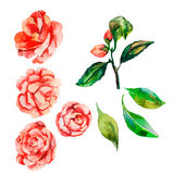 декоративные цветки Цветок вектора Цветы Стоковые Изображения RF