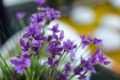 декоративный цветок Стоковое Изображение RF