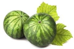 2 декоративных зеленых зрелых детеныша арбуза Стоковое Изображение