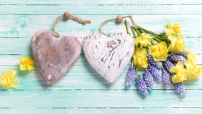 2 декоративных сердца и свежей желтой и голубой весна цветут Стоковое фото RF