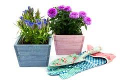 2 декоративных цветкового растения Стоковые Фото