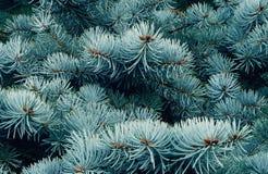 Елевые ветви в лесе Стоковая Фотография RF