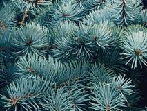 Елевые ветви в лесе Стоковое Изображение