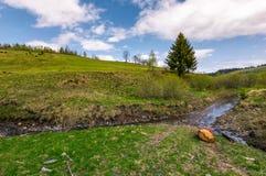 Елевые дерево и журнал около ручейка Стоковая Фотография RF
