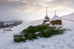 Елевые деревья и стога сена на снежном горном склоне Стоковая Фотография