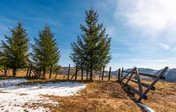 Елевые деревья около загородки на горном склоне стоковые фотографии rf