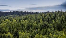 елевый ландшафт леса стоковое изображение