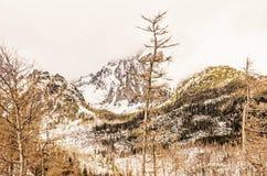Елевый лес после стихийного бедствия в высоком Tatras стоковые фотографии rf