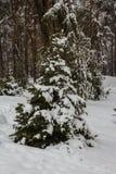 2 елевых дерева в снеге в зиме паркуют в Kyiv Украина Стоковое фото RF