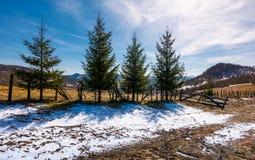 4 елевых дерева около гор обнести Стоковое фото RF