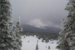 Ели и кусты ландшафта зимы в снеге Стоковая Фотография