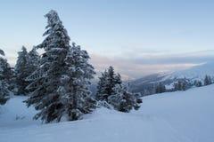 Ели и кусты ландшафта зимы в снеге Стоковое Изображение RF