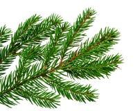 ель ветви стоковое изображение rf