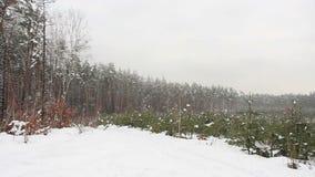 Ель в парке зимы, ландшафте акции видеоматериалы
