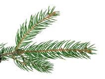 Ель изолированная без тени Конец-вверх Рождество Новый Yea стоковые фото