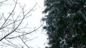 Ель и древесное представление на небе пока оно идет снег видеоматериал