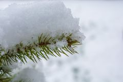 Ель покрыла свежим снегом стоковые фотографии rf