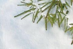 Ель разветвляет над предпосылкой снега с космосом для вашего текста стоковые фото