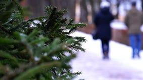 Ель разветвляет на предпосылке людей идя в парк зимы акции видеоматериалы