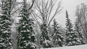 Ель снега, снежности, взгляд рождества видеоматериал