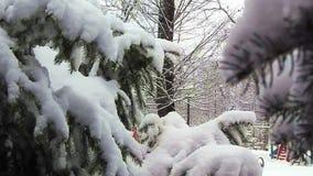 Ель снега, снежности, взгляд рождества сток-видео