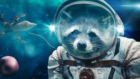 Енот в космосе стоковое фото rf