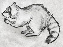 Енот нарисованный рукой Стоковое Изображение