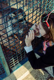 Енот приветствует девушку на зоопарке Стоковое Изображение RF