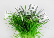 деньги травы Стоковые Изображения RF