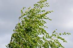 день ветреный стоковое изображение