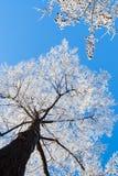 день морозный Стоковая Фотография