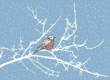 день морозный Стоковые Изображения RF