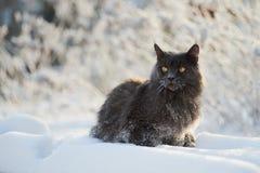 день морозный Стоковые Фото