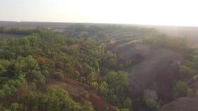 день солнечный Холмистый ландшафт с низкими деревьями и травой сток-видео