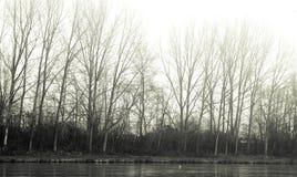 день туманнейший Стоковое Изображение RF