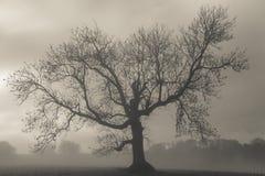 день туманнейший Стоковая Фотография