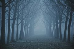 день туманнейший Стоковые Изображения