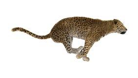 леопард большой кошки перевода 3D на белизне Стоковые Изображения